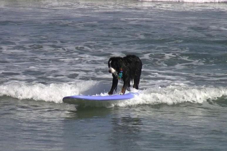 Bowser Surfing
