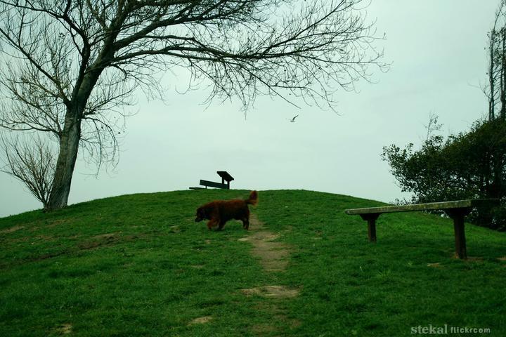 Pet Friendly Point Isabel Regional Shoreline Dog Park