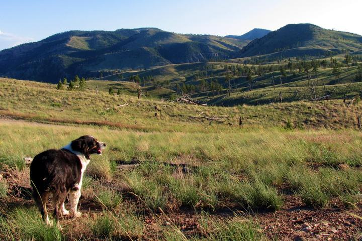 Dog Owner's Guide to Helena, MT