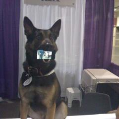 Dog shows iphone Movies!!
