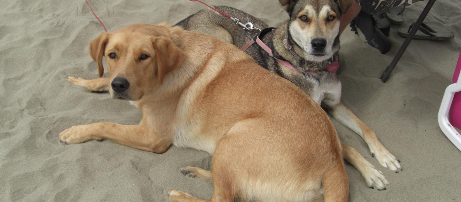 Dog Friendly Cayucos, CA - Bring Fido