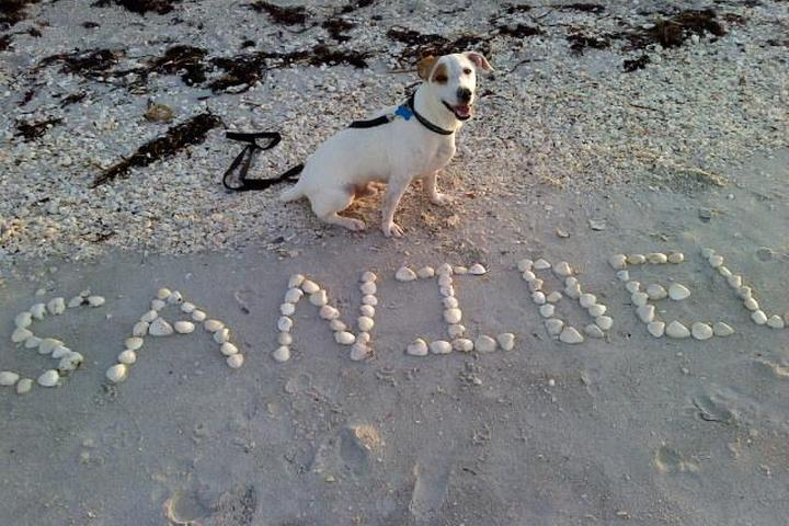 Dog Owner's Guide to  Sanibel, FL