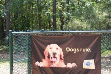 Dog Friendly Activities In Columbia Sc Bringfido