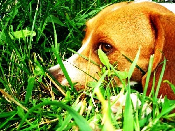 Dog Friendly Hotels Pagosa Springs