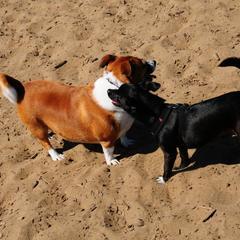 Sadie and Phil at the beach