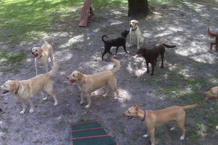 Pet Friendly The Dog House Boarding and Daycare