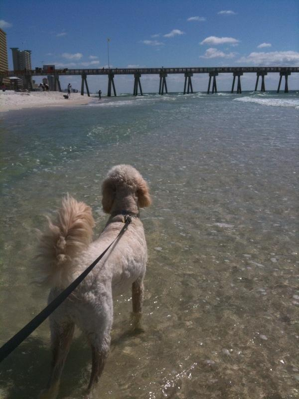 Dog Friendly Panama City Beach, FL