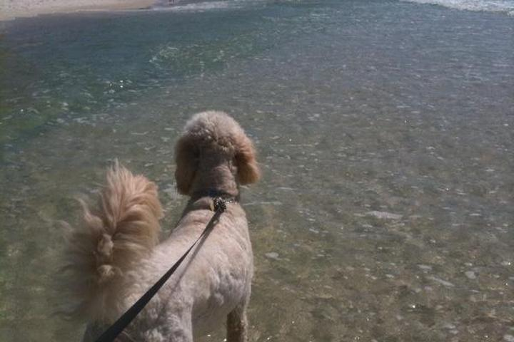 Dog Owner's Guide to  Panama City Beach, FL
