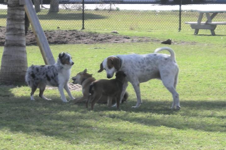 Pet Friendly Lori Wilson Park Dog Park