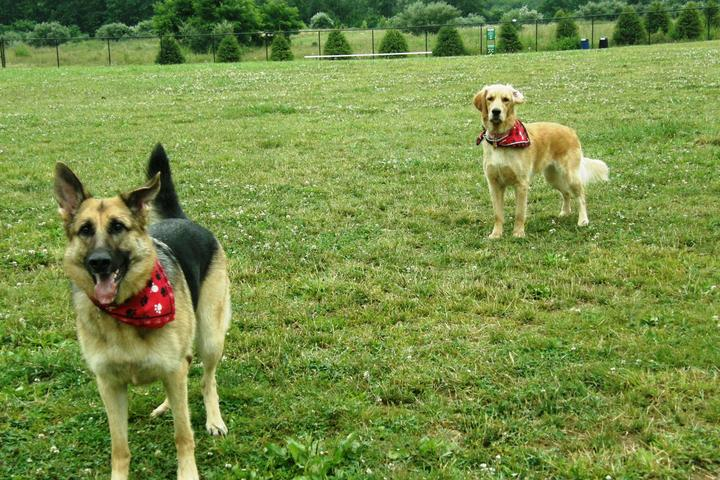 Pet Friendly Mt. Olive Dog Park
