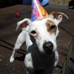 Birthday Parties Rule at BARK ATL