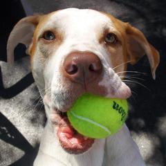 Remus Loves His Ball at BARK ATL