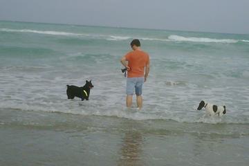 Pet Friendly Dog Beach of Hollywood