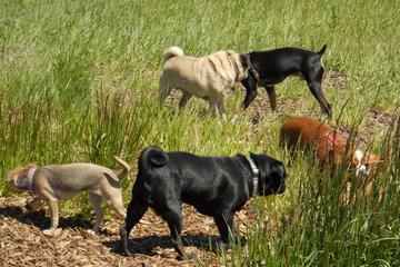 Pet Friendly Warren G. Magnuson Park Off-Leash Dog Area