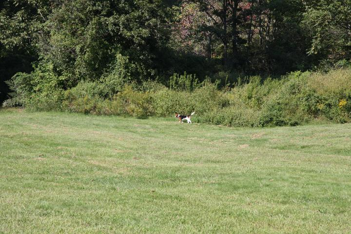 Pet Friendly Southbury Dog Park