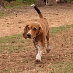My Dog Rocky!