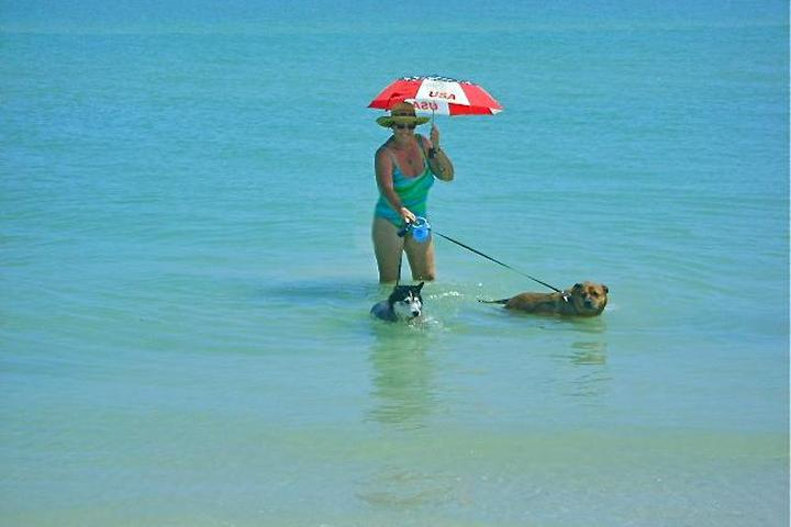 Dog Friendly Activities in Florida - Bring Fido