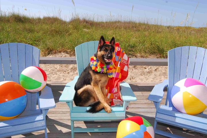 Dog Owner's Guide to  North Myrtle Beach, SC