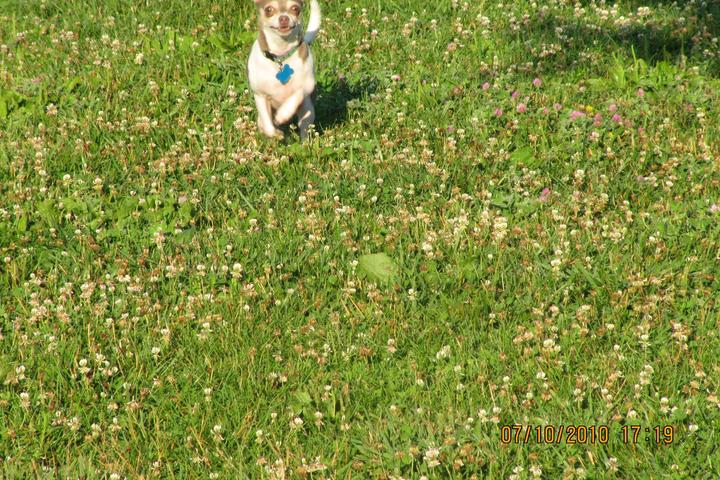 Pet Friendly Green Valley Forest Preserve