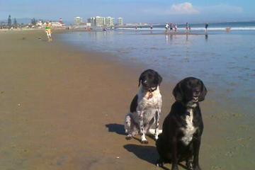 Pet Friendly Coronado Dog Beach