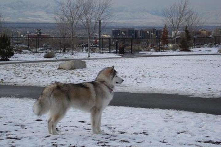 Dog Owner's Guide to Salt Lake City, UT