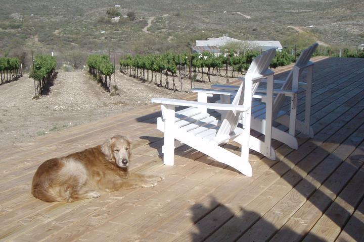 Pet Friendly Charron Vineyards & Winery