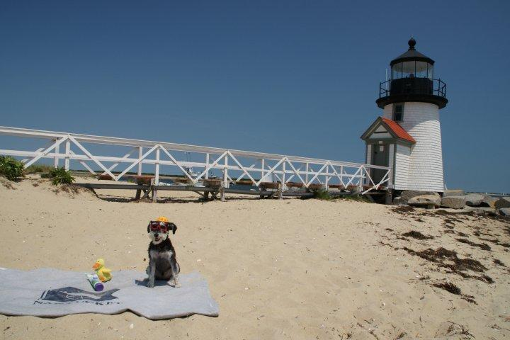 Pet Friendly Brant Point Beach
