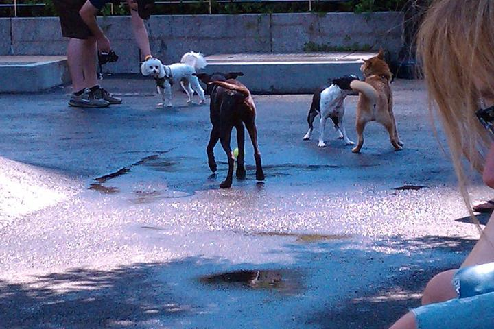 Pet Friendly Sirius Dog Run