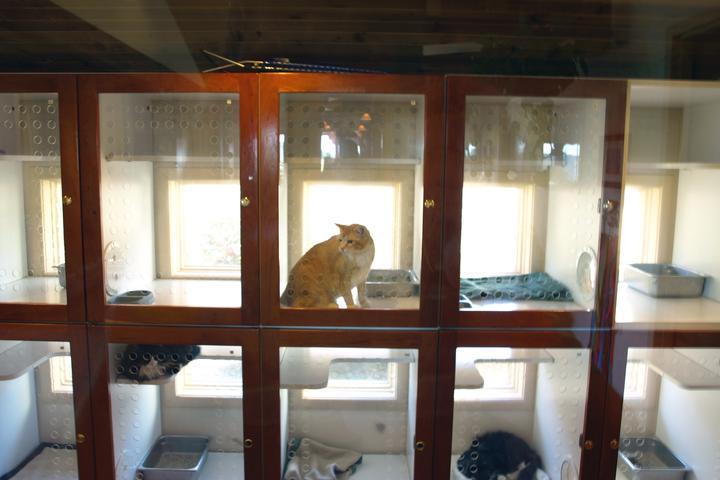 Pet Friendly Gunbarrel Veterinary Hospital