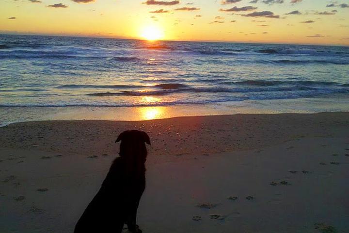 Pet Friendly Nags Head Beach