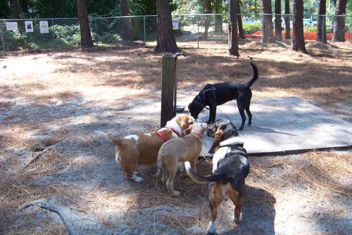 Pet Friendly Wilmington Dog Park at Empie
