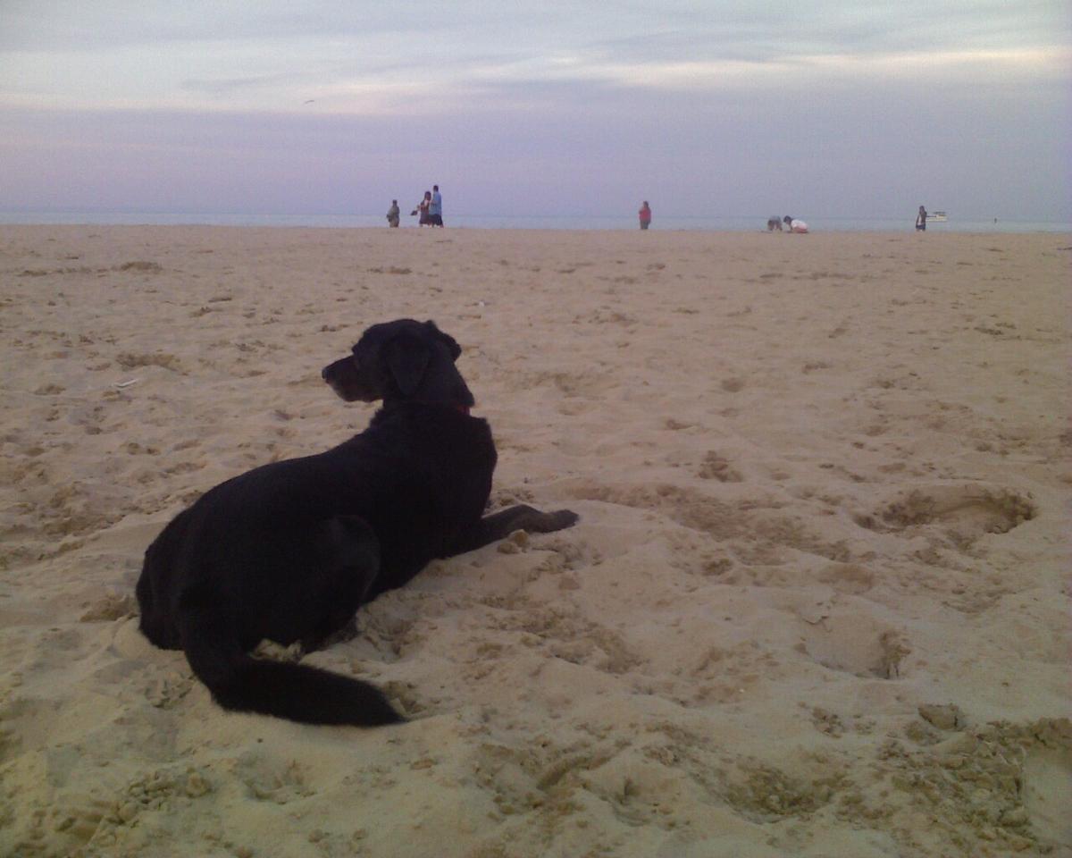 Jaiya at Montrose Dog Beach