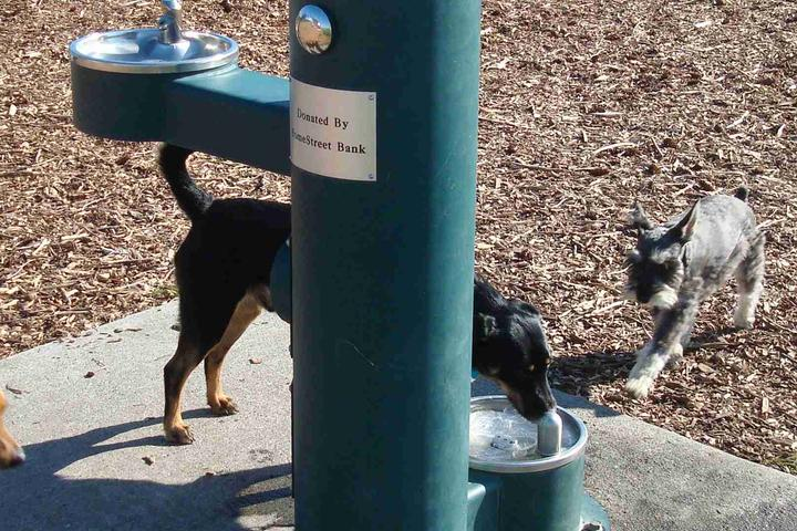 Pet Friendly Strawberry Fields Dog Park at the Athletic Complex