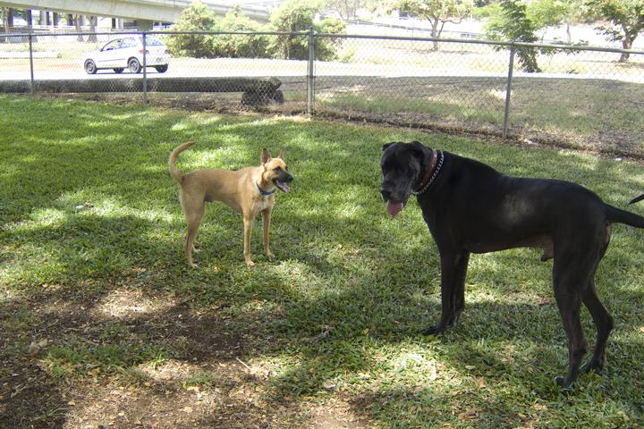 Pet Friendly Moanalua Dog Park