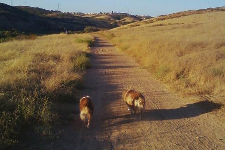 Pet Friendly Los Penasquitos Canyon Preserve