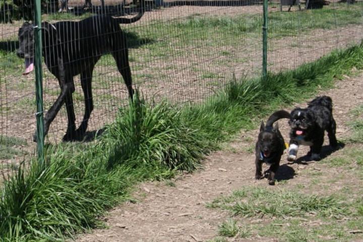 Pet Friendly Hazeldale Dog Park