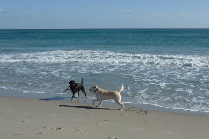 Pet Friendly Jupiter Beach (Off-Leash Beach)