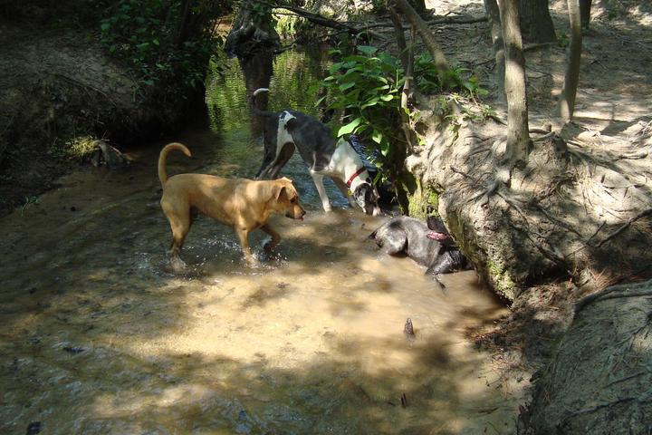Pet Friendly Martin Park