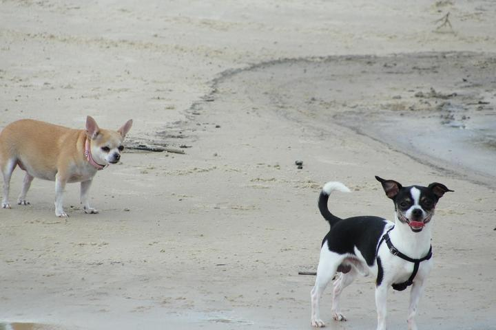 Pet Friendly Hancock County Beaches