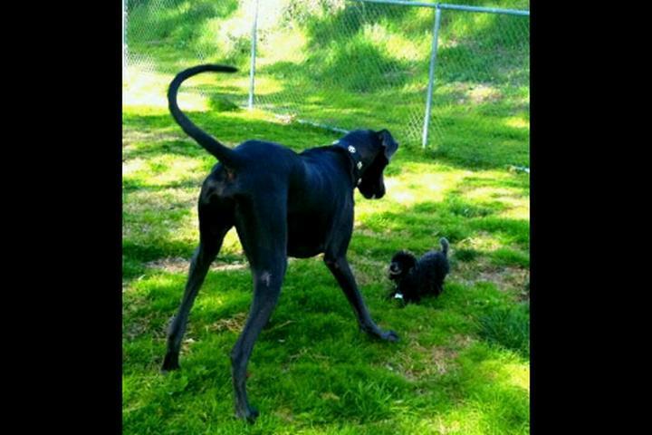 Pet Friendly Wildwood Dog Park