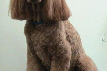 Pet Friendly Ola Puppy Dog Grooming