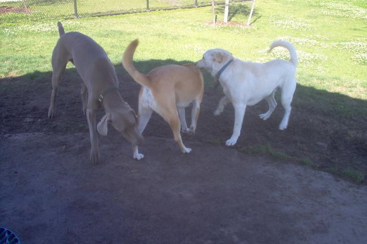 Pet Friendly Meadow Woods dog park