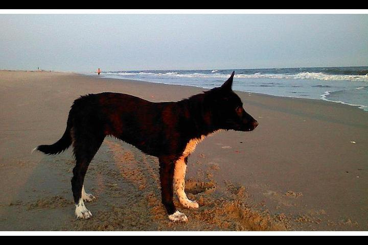 Pet Friendly Oak Island Beaches