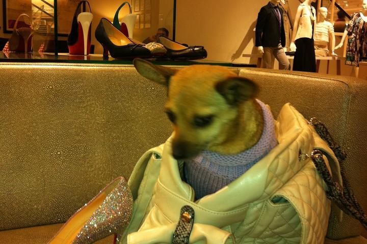 Dog Friendly Shopping in Illinois - Bring Fido