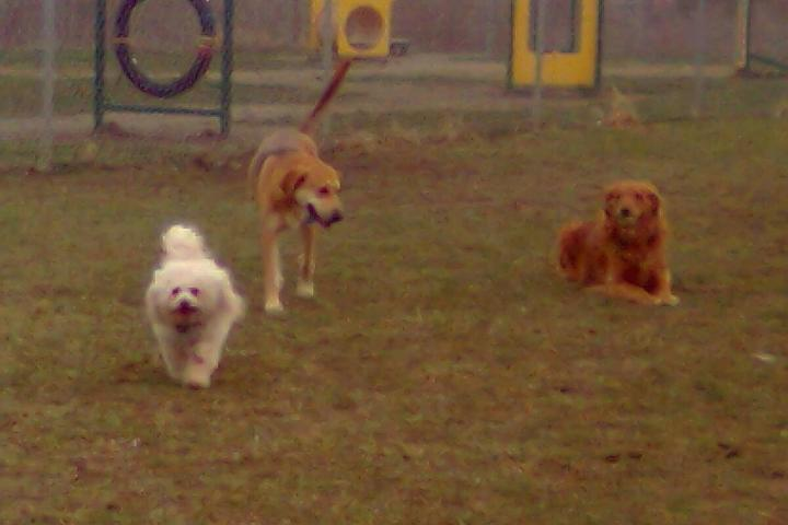 Pet Friendly Montgomery Township Bark Park