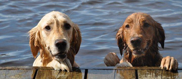 Dog Friendly Raleigh, NC - Bring Fido