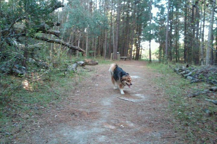 Pet Friendly Abbey Nature Trail
