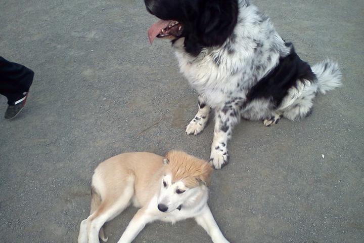 Pet Friendly Rock Hill District Dog Park