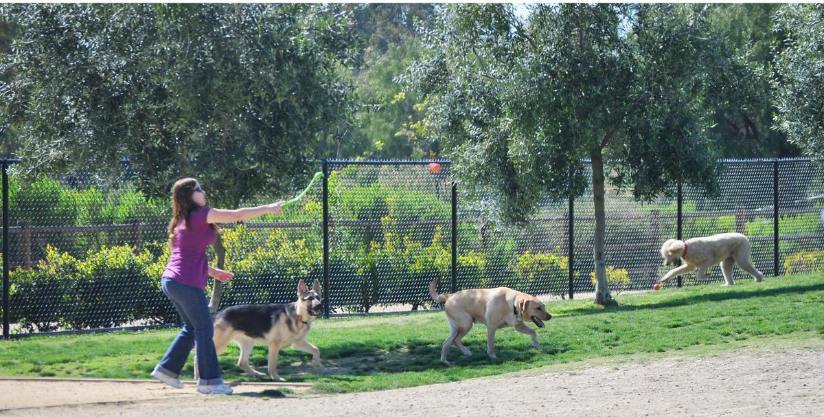 Dog Friendly Restaurants In Chula Vista