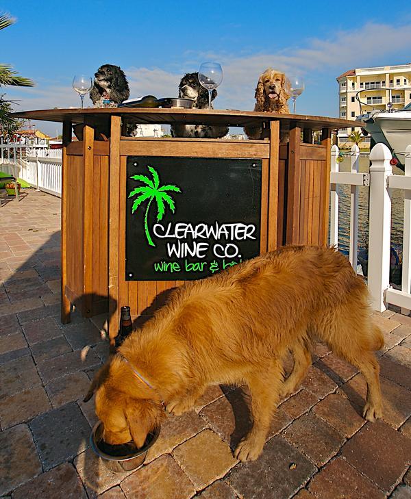 Dog Friendly Restaurants In Clearwater Fl